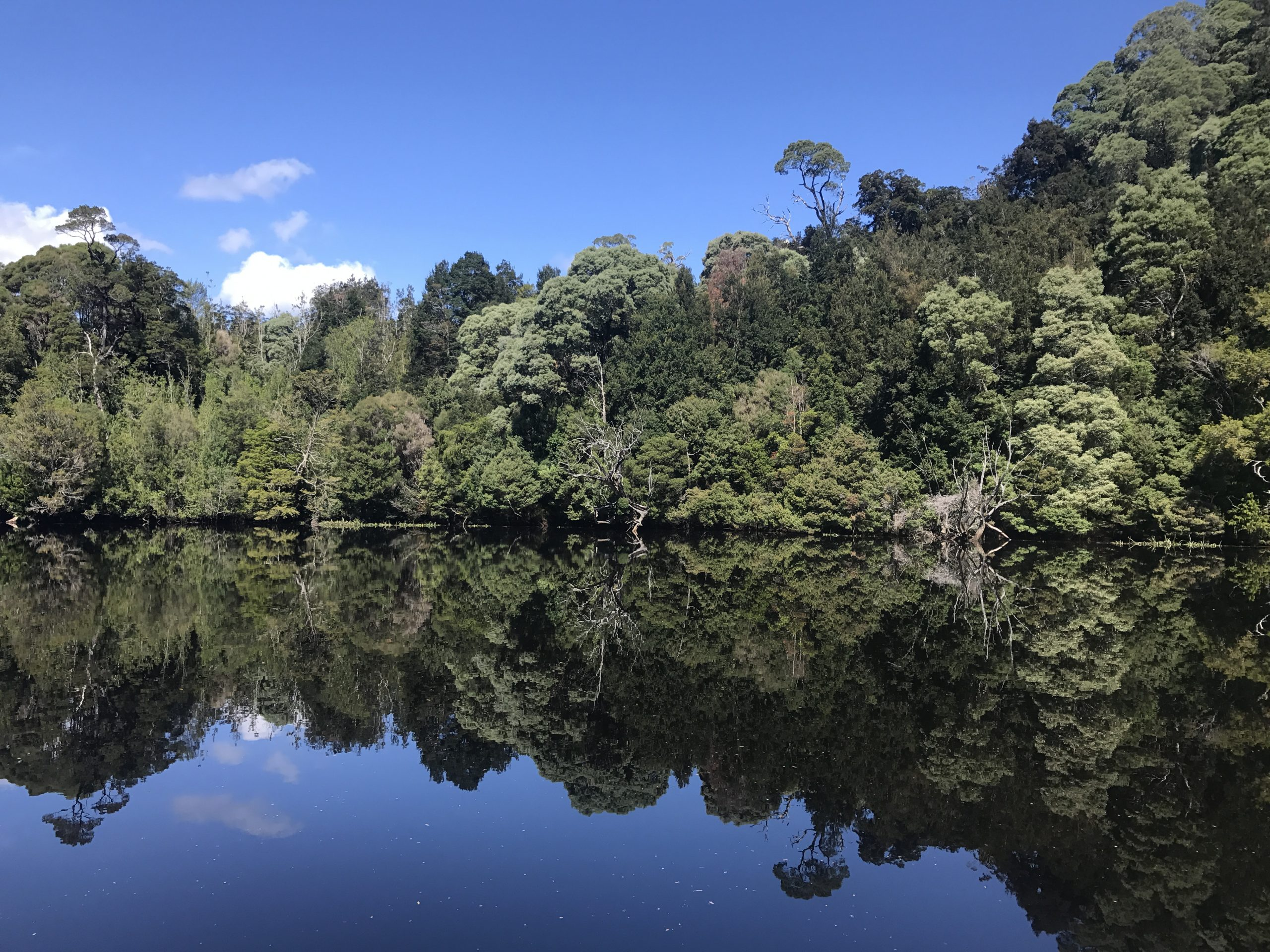 Top 5 short walks in the Tarkine, Tasmania