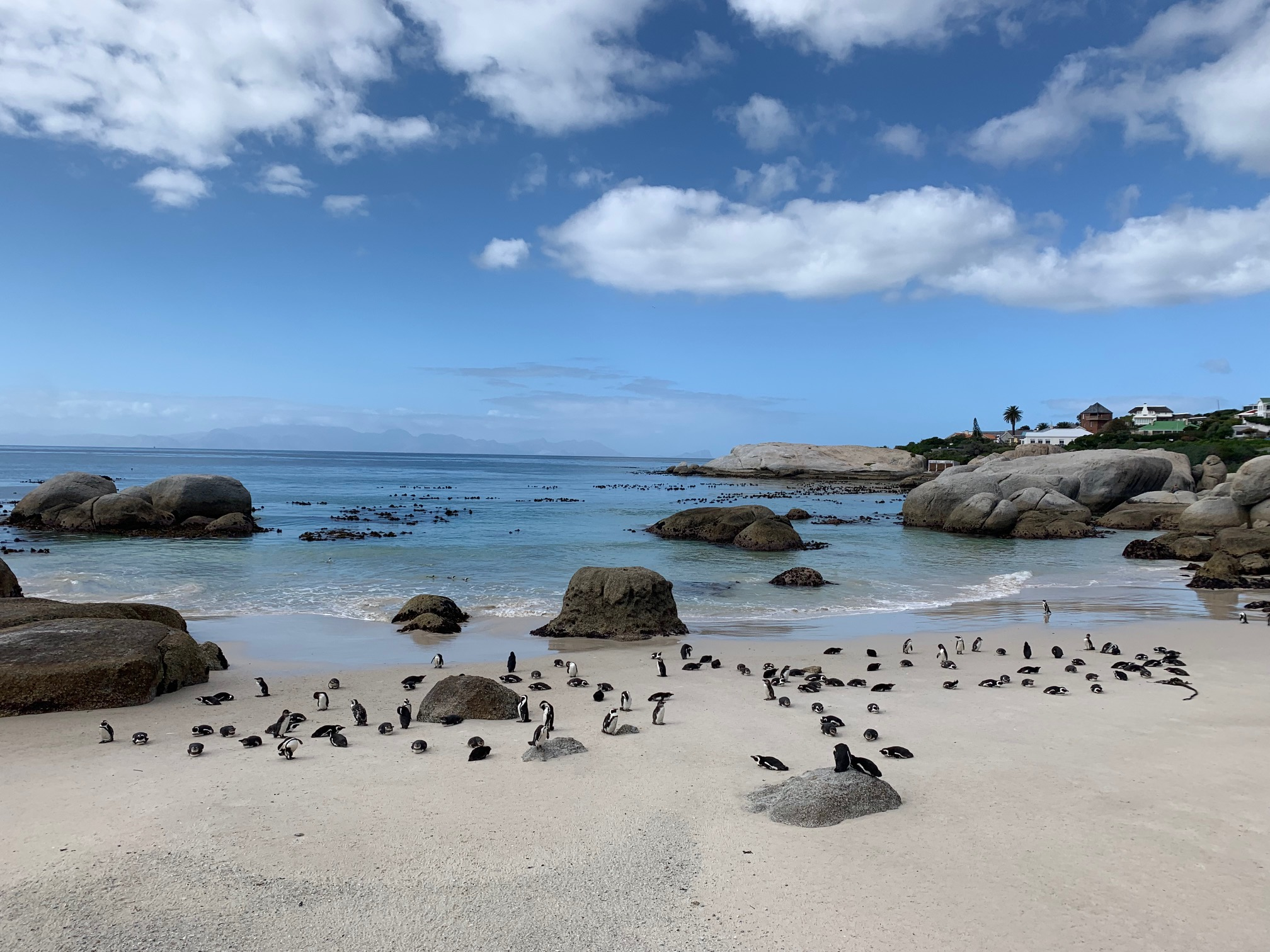 A day on Cape Peninsula, South Africa