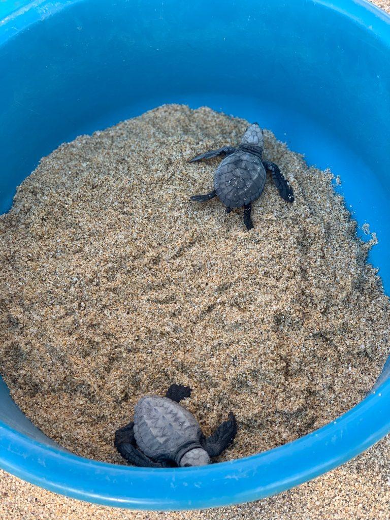 todos santos turtle sanctuary
