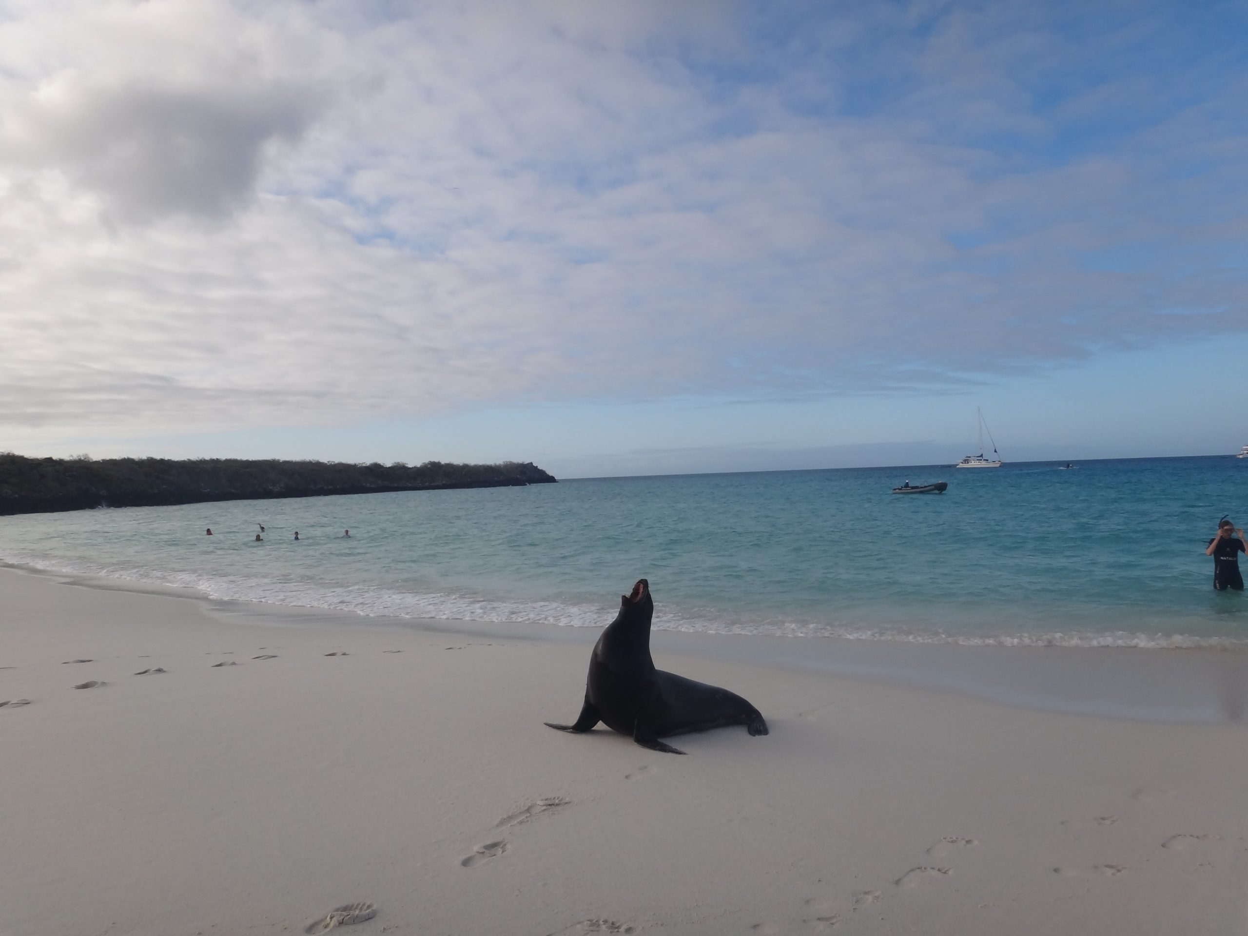 Top 5 things to see in the Galapagos Islands, Ecuador