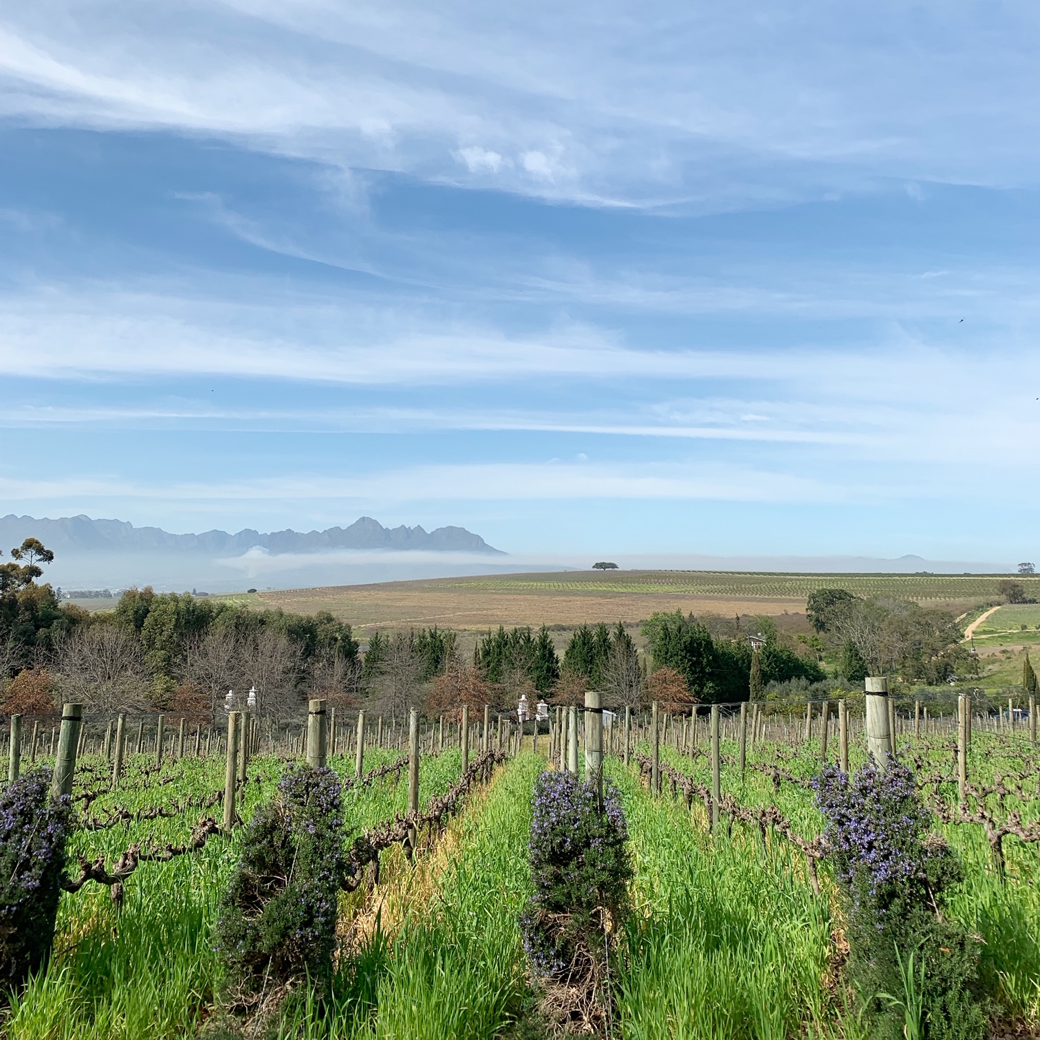 Wine and Feminism in South Africa