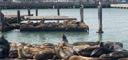 Taking in the sights, smells and sea lions of San Francisco. Hello USA!