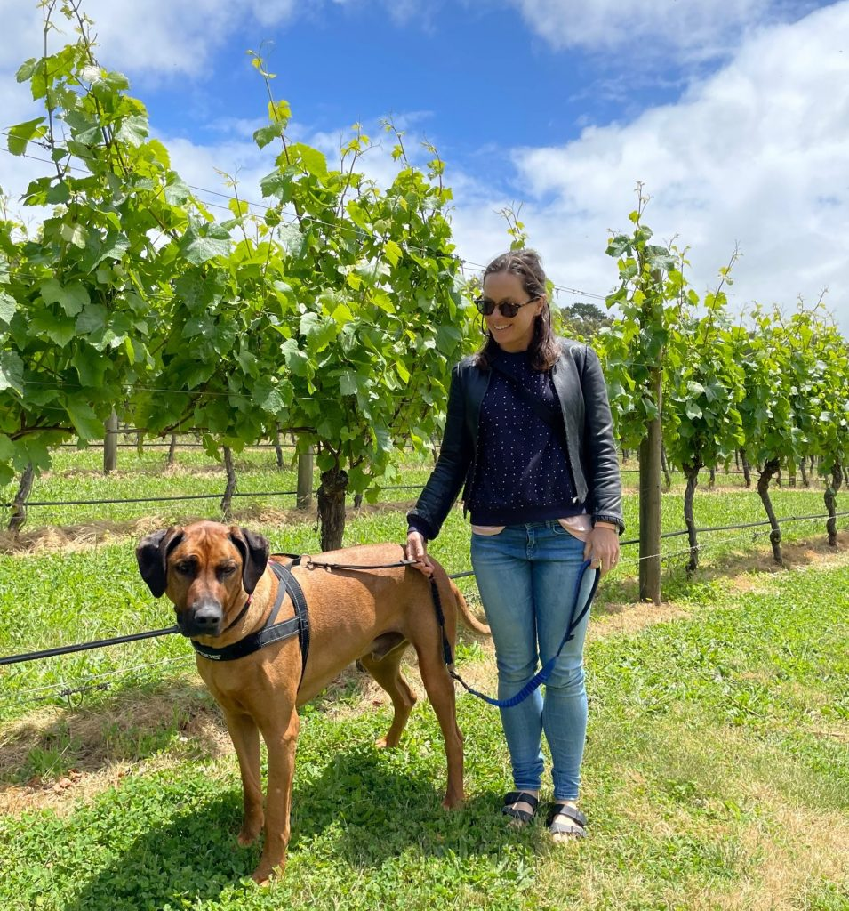 Dog at vineyard